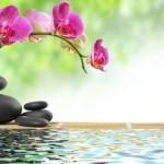 Photo: Calmness, stones and flower